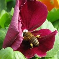 bee-happy-031315