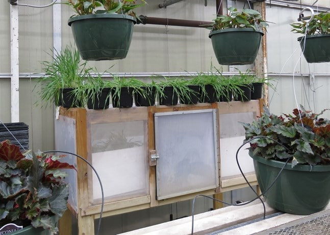 aphid-banker-plant-housing-1_647x462