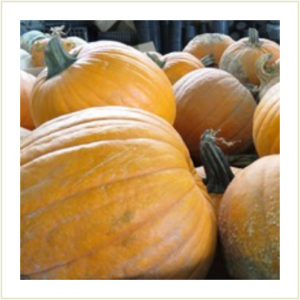 Jack O' Lantern Pumpkins