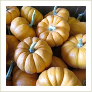 Mini Pumpkin gourds