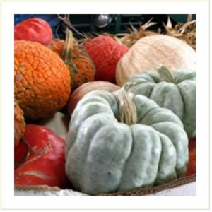 Mixed Specialty Pumpkins